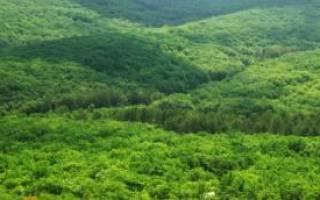 Как получить земли лесного фонда в собственность? Секреты сделки