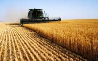Все о ценах на аренду земель под сельское хозяйство: во сколько обойдется наем надела сельхозназначения у государства?