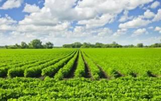 Как правильно взять землю в аренду под ЛПХ, не нарушая законодательство?
